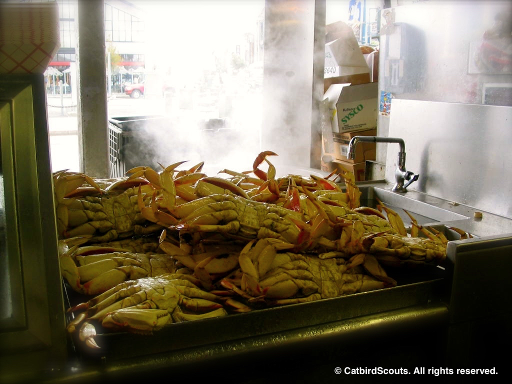 Crabs-Fishermans-Wharf-Catbird-Scouts