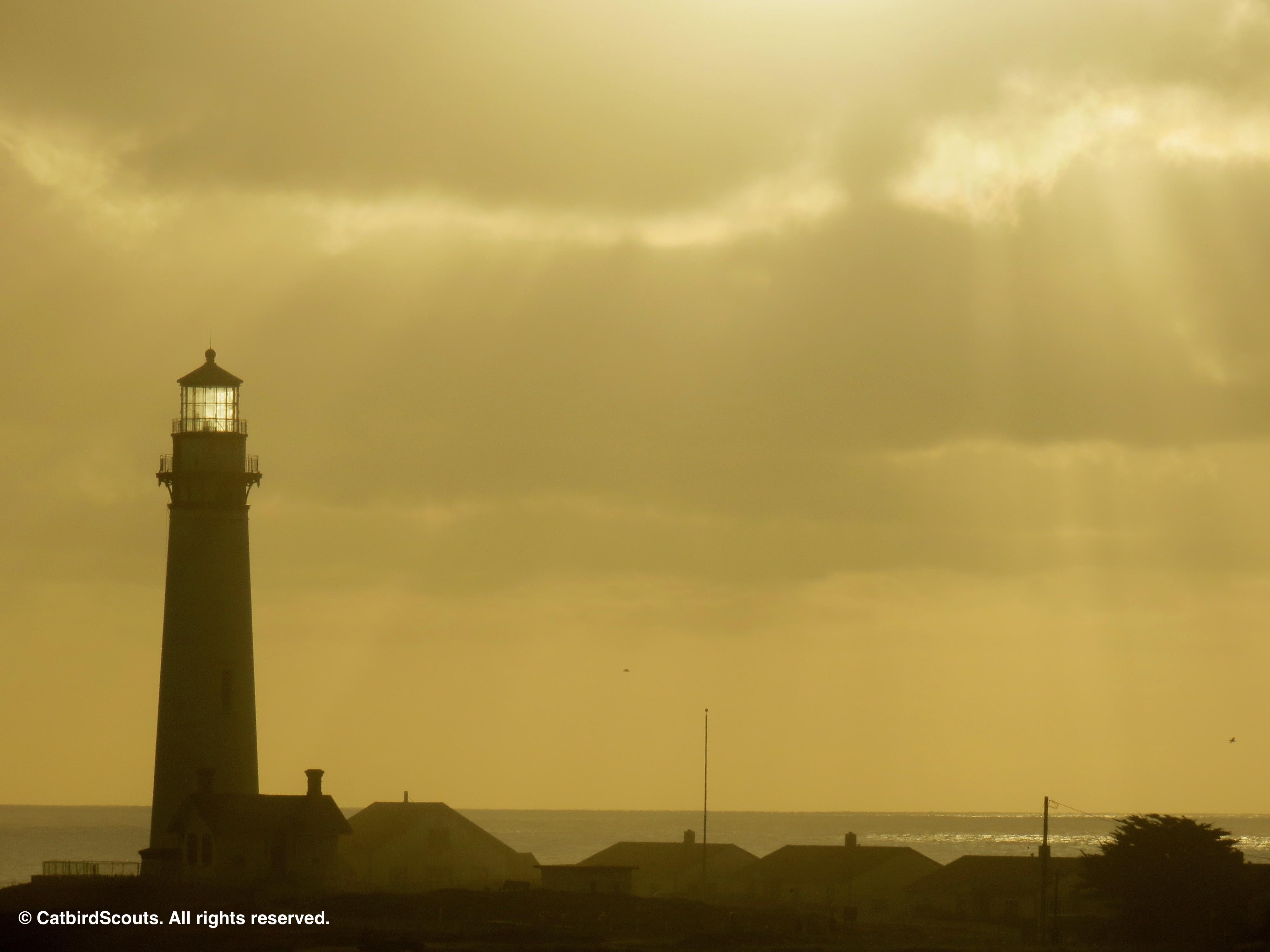Lighthouse-2-Catbird-Scouts