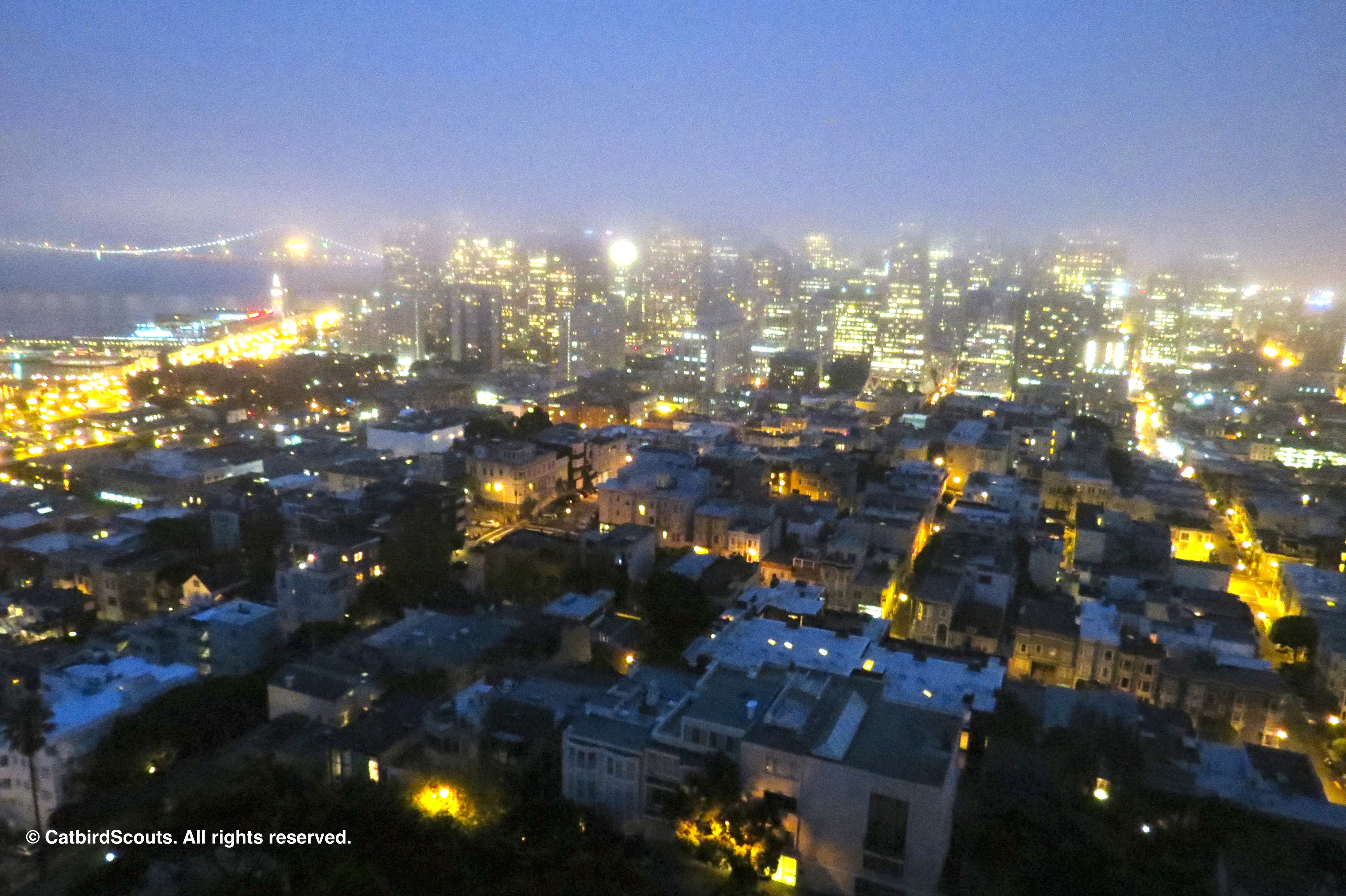 SF-NightimeView-Catbird-Scouts