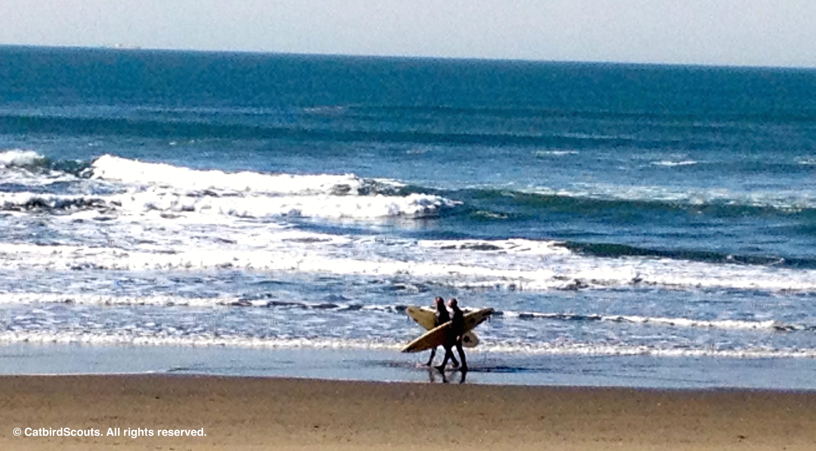 Surfers-Catbird-Scouts